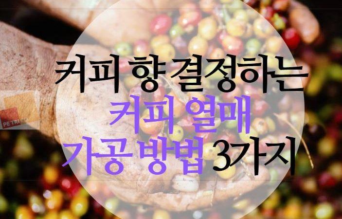 커피 향에 영향을 주는 열매 수확물 가공 방법 3가지