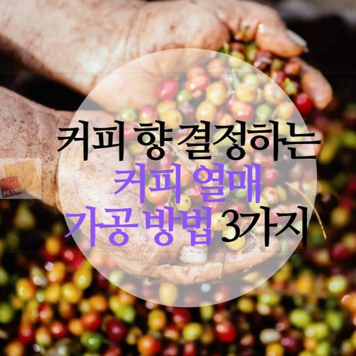 열매 수확물 가공 방법